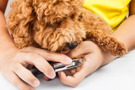 犬が唸るのをやめさせるにはストレスの原因をなくす