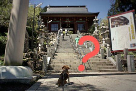 犬を連れて神社に参拝していいのか