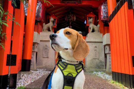 犬連れOKの神社に行くマナー