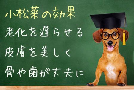 犬の小松菜の効果