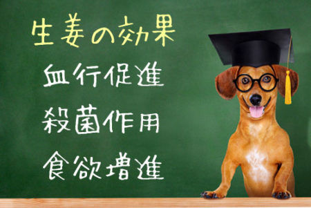 犬の生姜効果