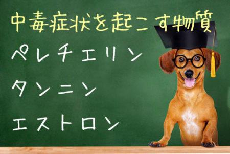 犬がザクロを食べると中毒症状