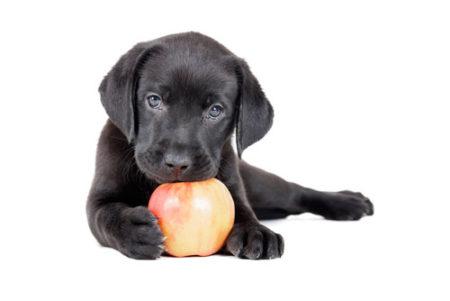 犬はりんごの皮を食べても大丈夫