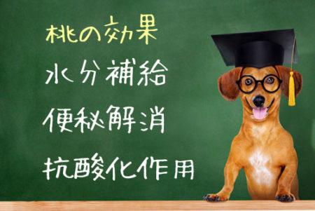 犬の桃効果