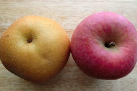 犬に梨とりんごどっち