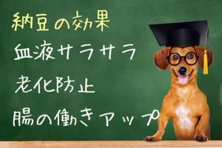 犬の納豆効果